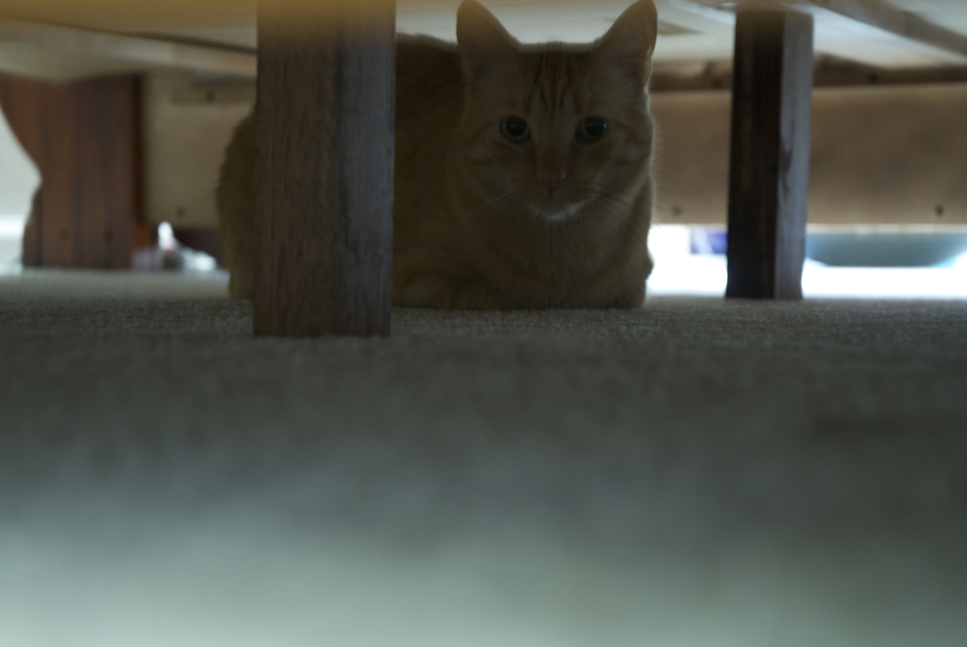 I'm hiding under the bed.