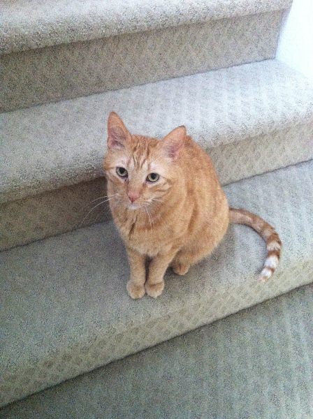 I greet you at the stairs.